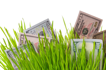 Money in lawn care